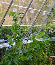 Trellising Kit for Palram Greenhouses