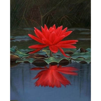 Ponds and Aquarium - Rare Red Water Lotus Seeds in Pakistan for Rs